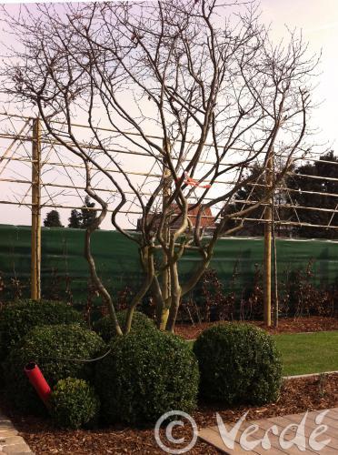 Bvba verd tuinarchitectuur op tuinarchitect for Tuinarchitect gent